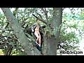 Alex Boys: AlexBoys Rasto - Tree Cum
